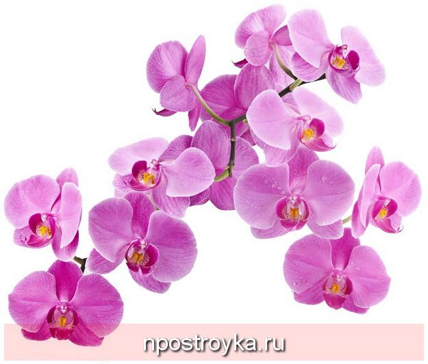 Фотопечать цветы фото 40