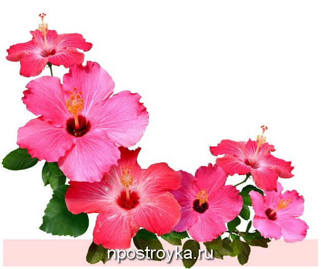 Фотопечать цветы фото 39